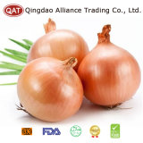 Top Quality Yellow Fresh Onion with Good Price