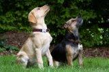 Custom High Quality Pet Products Polyester Nylon Dog Collar