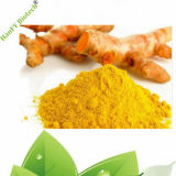 Plant Extract Healthy Product Cheap Bulk Price 95% Extract of Ginger Powder
