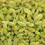Best Price Preserved Fruit Green Raisins From China