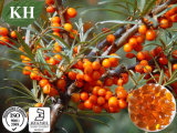 100% Natural Sea Buckthorn Seed Oil