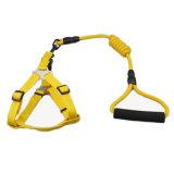 Wholesale Manufactory Colorful Customized Fashionable Training Durable Hemp Pet Rope Dog Collar Leash