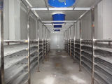 Sea Food Vegetables Blast Freezers with Large Size Cold Room