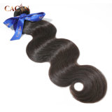 Best 100% Raw Remy Curly Natural Virgin Brazilian Cuticle Aligned Human Hair