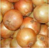 Yellow Onion with Good Quality and Price