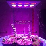 Best LED Panels for Cultivation LED Grow Lights