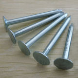 Factory Price Carbon Steel Gi Cupper Nail