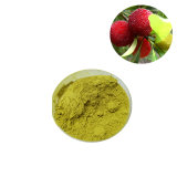 Bayberry Bark Extract 98% Myricetin for Healthy Supplements