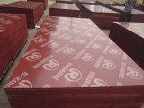 18mm Red Film Face Plywood for Iraq Market