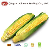 IQF Sweet Corn COB with Top Quality