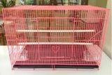 Med-Vet-Sbc06 Square Bird Cage