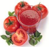 Tomato Paste with High Quality