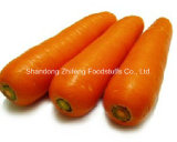 2017 New Crop Shandong Carrot