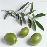 Manufacturer of Olive Leaf Extract/FDA; ISO22000; Kosher; SGS; Halal.