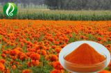 Professional Factory Supply Marigold Flower Extract Lutein 5%