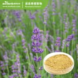 Factory Wholesale 100% Natural Plant Extract Rosemary Extract