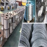 Electro Galvnaized Iron Steel Wire (10G/M2 to 30G/M2)