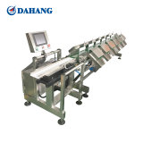 Automatic Palmatum Weighing and Grading Equipment Supplier