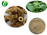 Factory Supply Siberian Ginseng Extract 1% Eleutherosides B + E