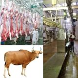 Factory-Direct Supply Cattle Slaughterhouse Equipment for Turnkey Cattle Slaughter Line in Cattle Slaughter House