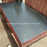 Hot Sale Black Film Faced Plywood for Construction