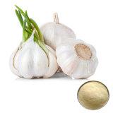 Black Garlic Extract/Garlic Extract Alliin1% -5%
