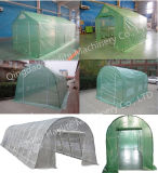 Greenhouse for Vegetable Flower Plant PVC PE Outdoor on Sale