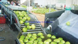 Full Automatic Stainless Steel Fruit and Vegetable Processing/Washing Equipment