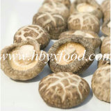 Dried Vegetable Tea Flower Mushroom
