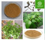 High Quality Natural Hedera Helix Extract Powder