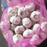 Fresh Normal White Garlic Packed in 10kg Mesh Bag