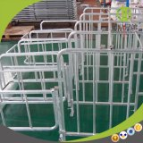 Galvanized Steel Good Quality Pig Gestation Stall