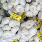 Pure White Garlic Small Packing of 500g