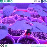 Rbir LED Plant Growth Light with General Intensity Supplying