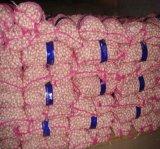 Low Price Wholesale Fresh Crop Premium Quality Red Garlics