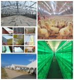 Prefabricated Design Poultry Farm with Full Set Equipment