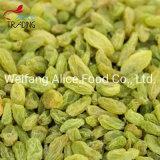 Wholesale Bulk Price Chinese Green Raisins