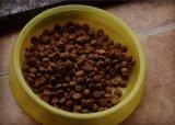 Lecithin Regulates Gastrointestinal Pet Dog Food