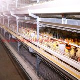 The Best Price Automatic Poultry Equipment Broiler Chicken Battery Cage