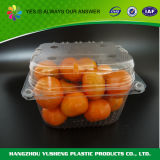 Vacuum Forming Clear Disposable Plastic Fruit Container with Lid