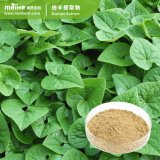 High Quality Asarum Sieboldii Extract /Manchurian Wild Ginger Extract