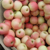 Selecting Quality Fresh Red Gala Apple