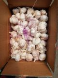 The Lowest Price to Sell, 5.5cm of Garlic in Line with EU Standards, Whatsapp: 13210318631