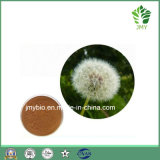 20% Phytosterols Dandelion Extract Powder, 5: 1~20: 1