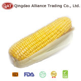 IQF Sweet Corn COB with Competitive Price