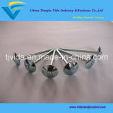 Galvanized Umbrella Head Roofing Nails From Factory