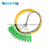 12core Sc/APC Singlemode Fiber Optic Pigtails with Outer Jacket