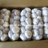 Chinese Pure White Garlic 1kg Bag Small Package