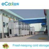 Fruits and Vegetables Fresh Keeping Cold Room