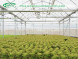 Modern Hydroponics broccoli Greenhouse for Sale